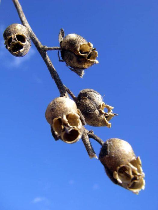 Creepy Plants (18 pics)