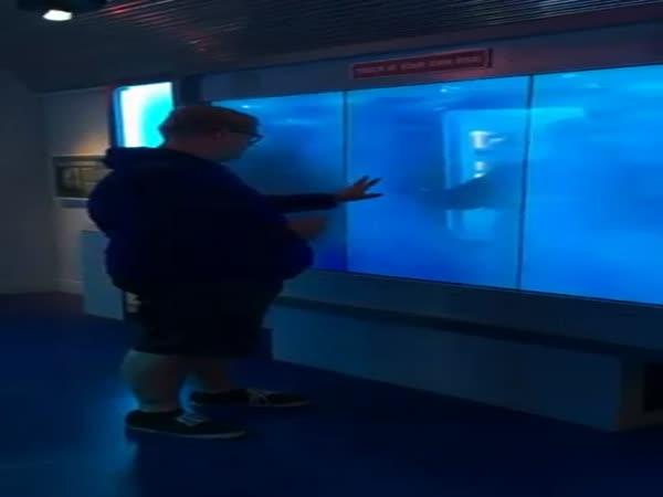 Shark Attack Prank