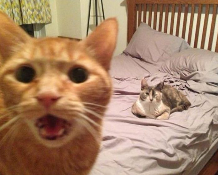 Cats Photobomb Photos (11 pics)