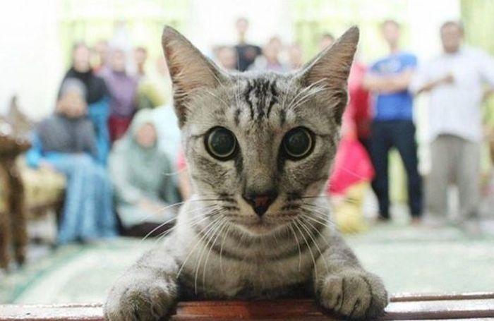Cats Photobomb Photos (11 pics)