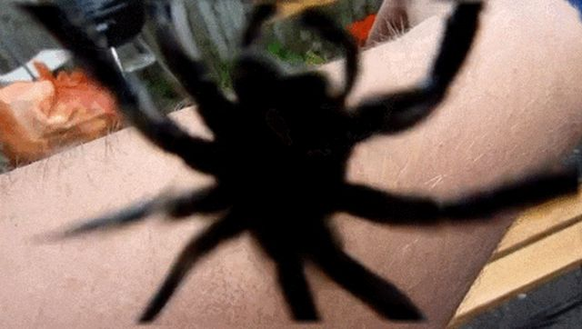 Spiders (15 gifs)