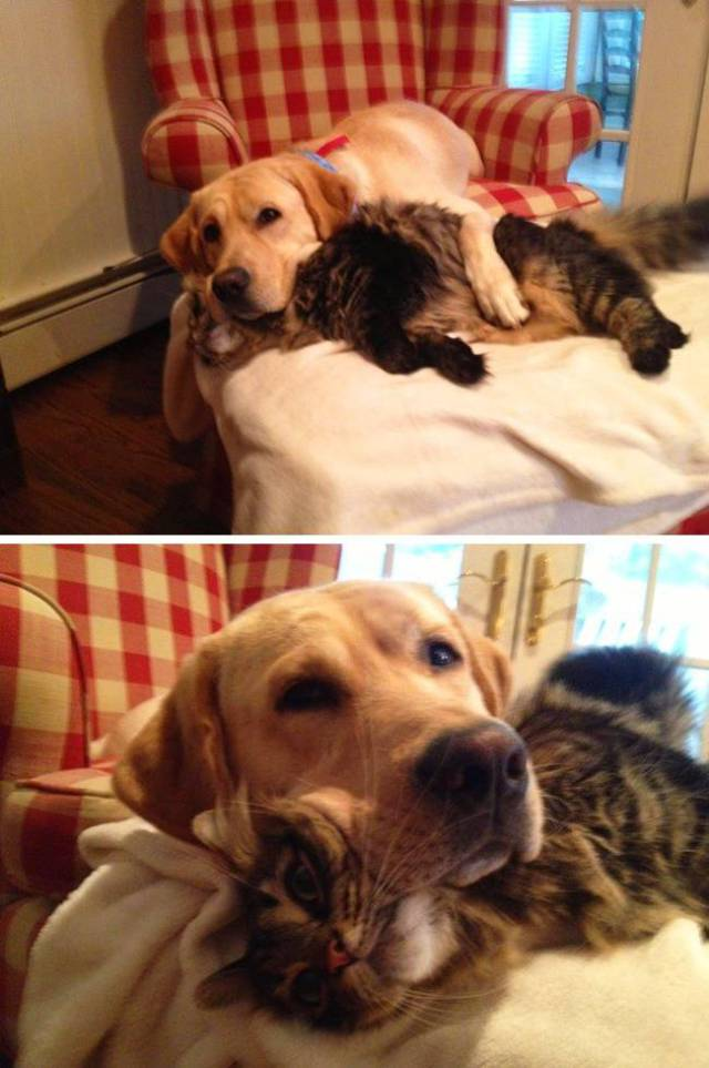 Cats And Dogs (19 pics)