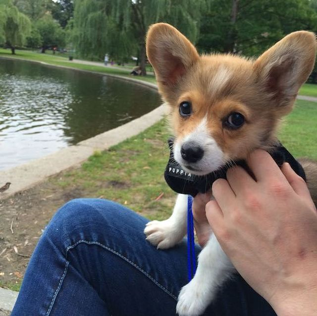 The Most Popular Dog Names In America (20 pics)