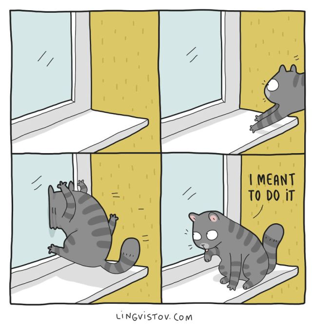What It's Like To Live With A Cat (17 pics)