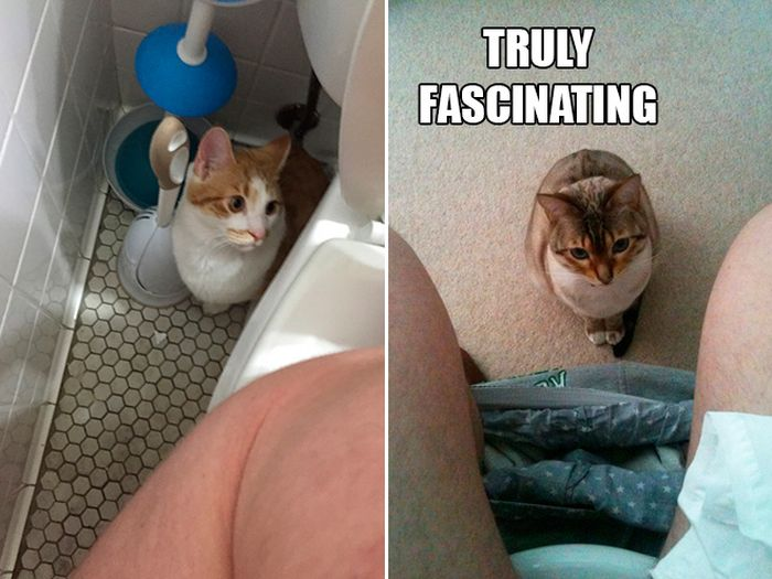 If Cats Were Scientists Nothing Would Happen (16 pics)