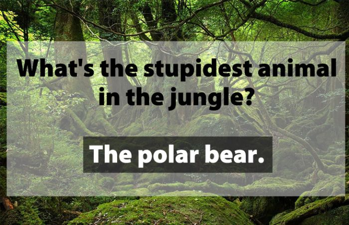 Jokes That Are So Dumb, They're Actually Funny (24 pics)