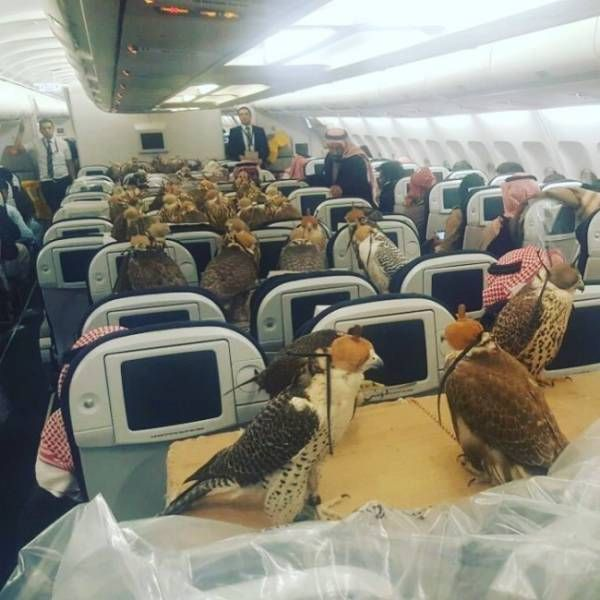 Awkward Airplane Photos (20 pics)
