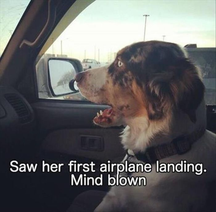 Funny Animals With Caption (30 pics)