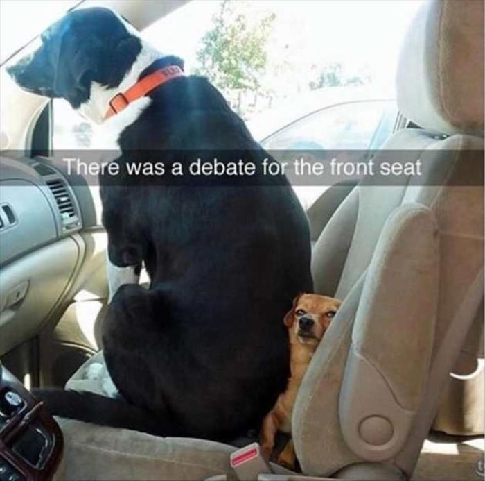 Funny Animals With Caption (30 pics)