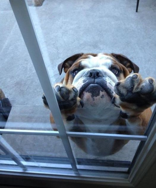 Begging Dogs (25 pics)