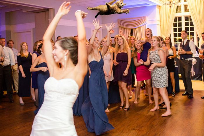 Bridal Bouquets Replaced With Cats (15 pics)