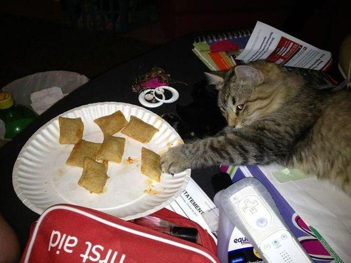 Lazy Cats (22 pics)