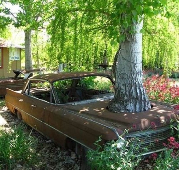 Trees And Things (19 pics)