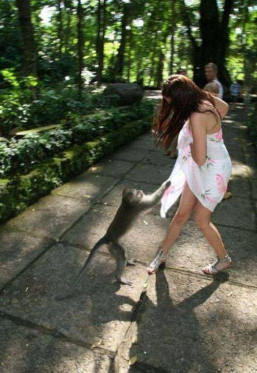 Animals Undress Girls (15 pics)