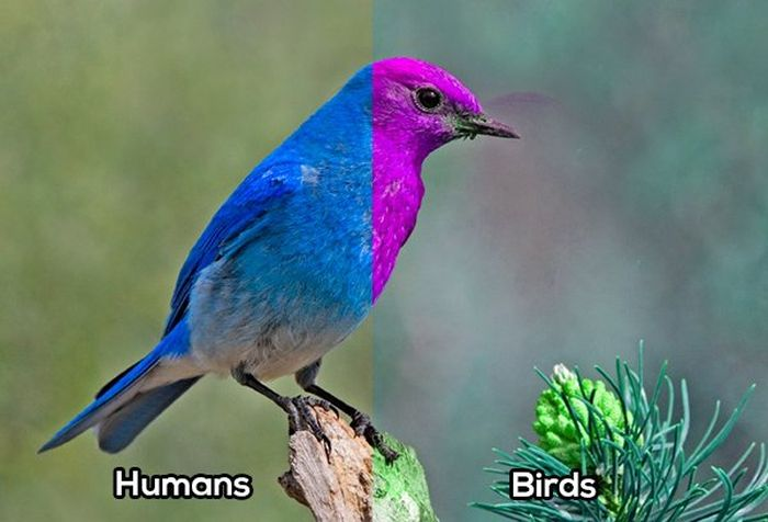 How Animals See The World (10 pics)