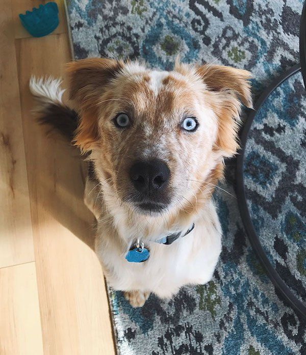 Awesome Transformation Of Adopted Rescue Dog (4 pics)