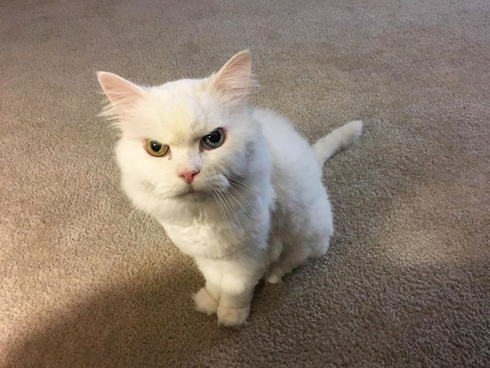 Cats Judging You (17 pics)