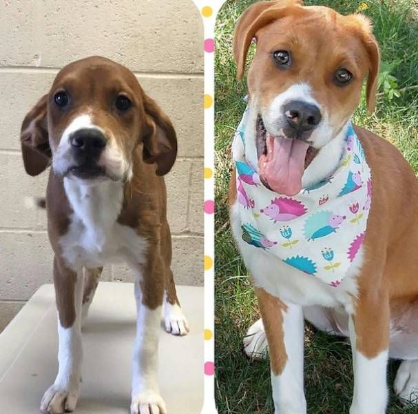 Before And After Animal Adoption (25 pics)