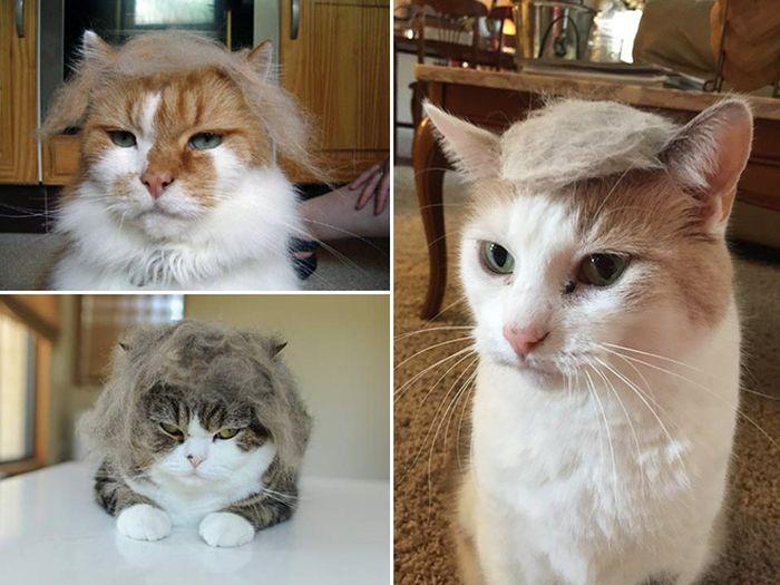 Donald Trump Cats (18 pics)