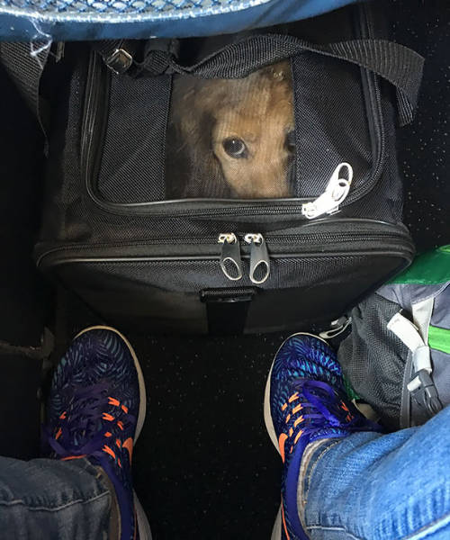 These Are The Best Airplane Passengers (40 pics)
