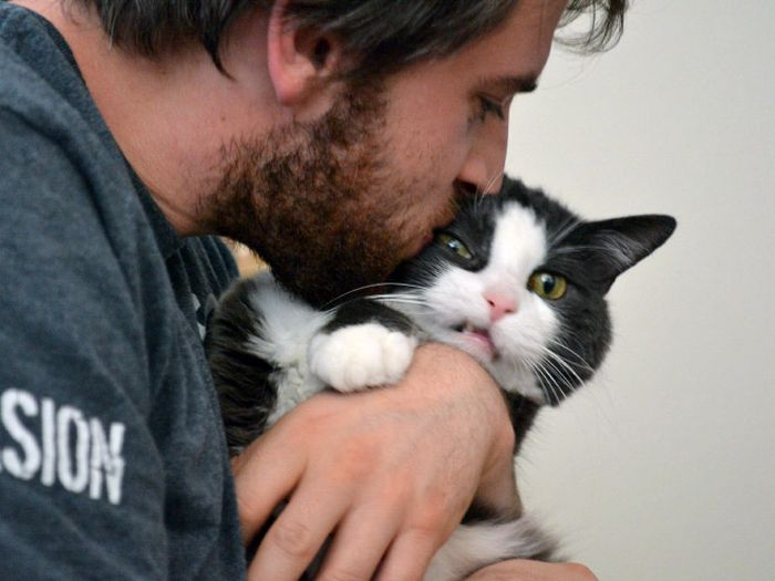 Funny Cats (15 pics)