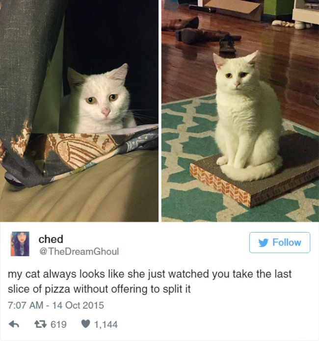 Cat Tweets (15 pics)