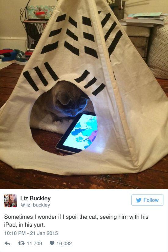 Cat Tweets (15 pics)