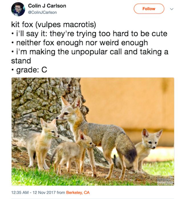 Guy Rating Foxes On Twitter (19 pics)