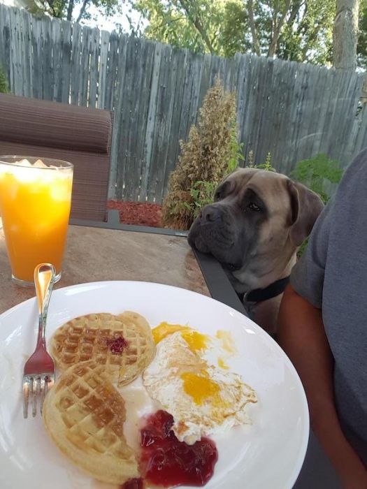 Pets And Food (24 pics)
