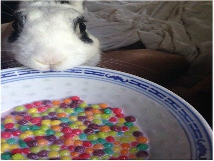 Pets And Food (24 pics)
