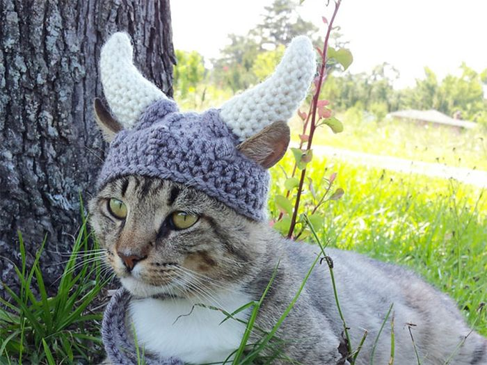 Hilarious Winter Hats For You and Your Pets (15 pics)