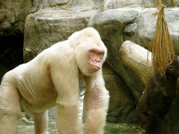 Albino Animals (26 pics)