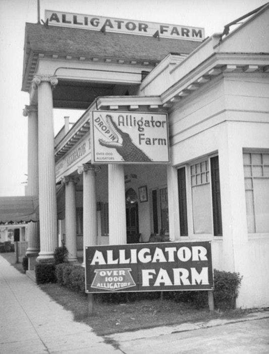 Vintage Photos Of Los Angeles Alligator Farm (11 pics)