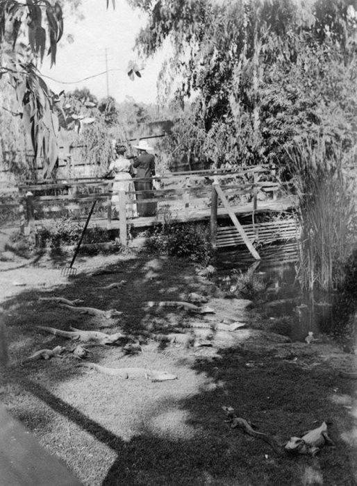 Vintage Photos Of Los Angeles Alligator Farm (11 pics)