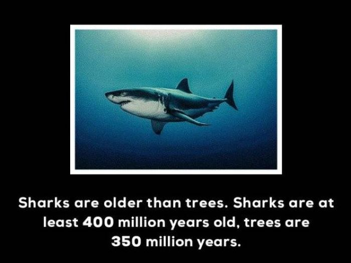 Unbelievable Facts (14 pics)