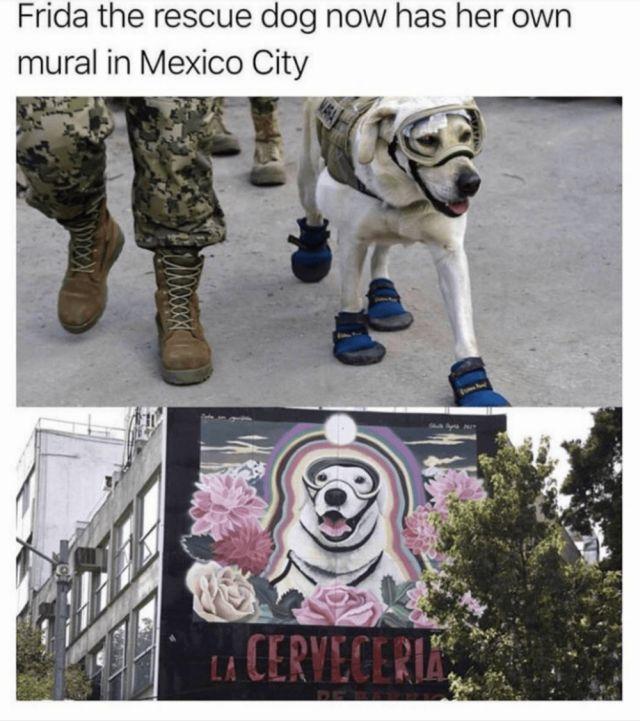 Memes (24 pics)