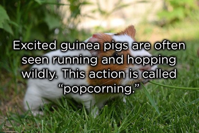 Weird Animal Facts (22 pics)
