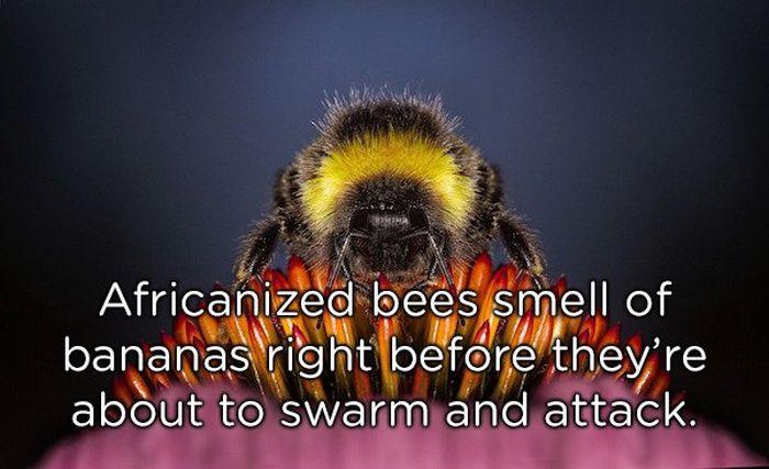 Weird Animal Facts (22 pics)