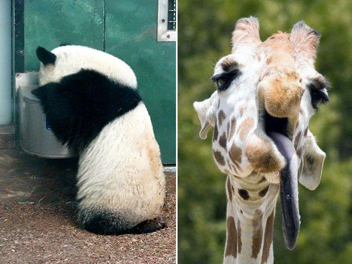 Animals With Hangover (16 pics)
