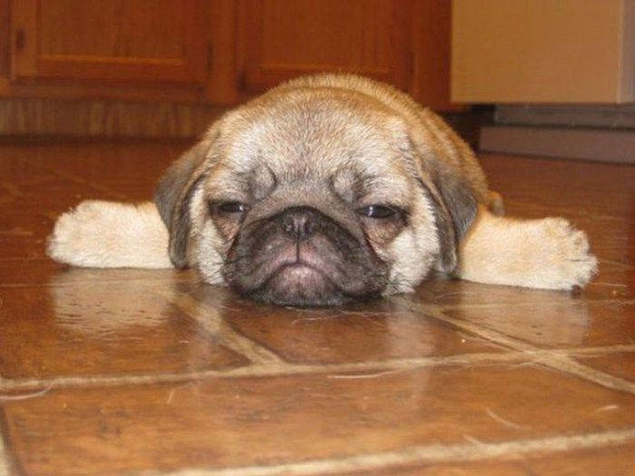 Animals With Hangover (16 pics)