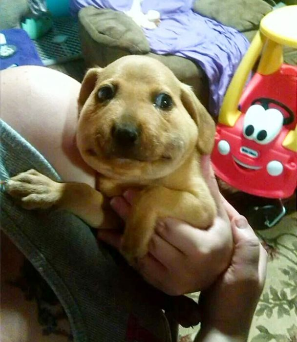 Dogs Who Tried to Eat a Bee (15 pics)