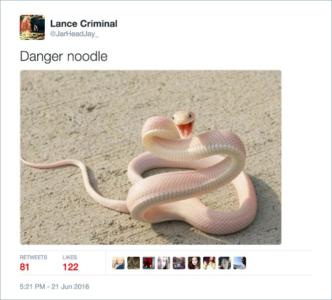 Twitter Users Create Better Names For Animals (16 pics)