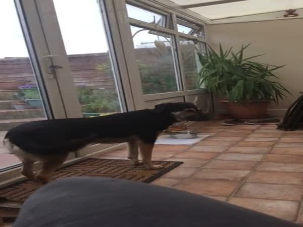 Dog Demonstrates Beautiful Singing Voice
