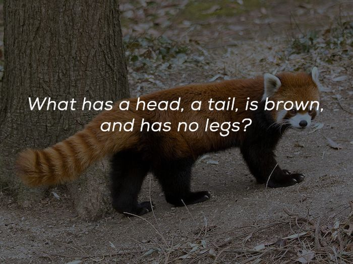 Nice Riddles (25 pics)