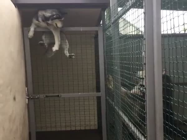 The Great Dog Escape