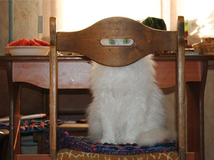 Camouflaged Cats That Win at Hide and Seek (20 pics)