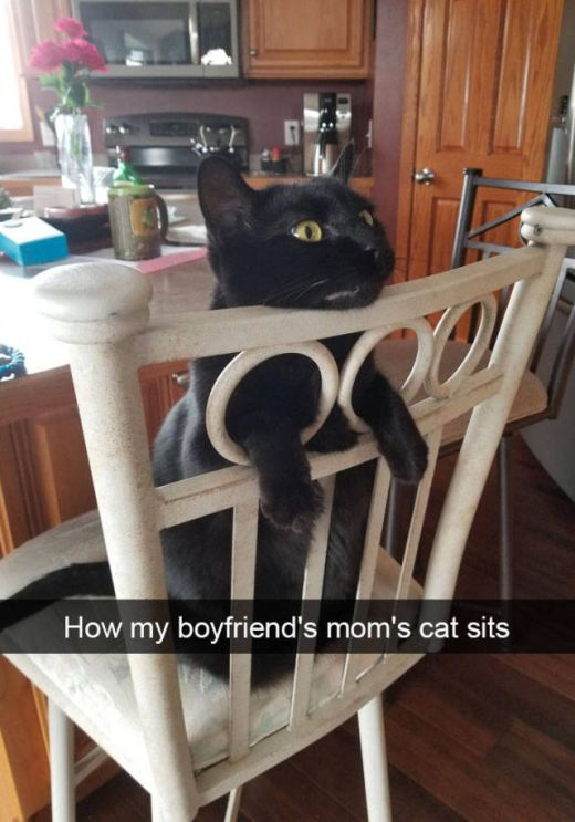 Snapchat Was Apparently Created For Cats (38 pics)