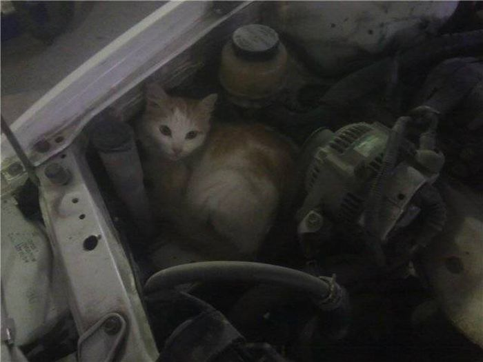 Found Under Cars' Hoods (20 pics)