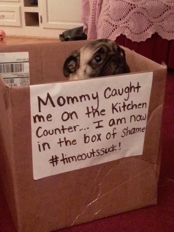 Dog Shaming (25 pics)