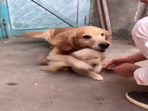 Mom Dog Would Prefer You Not Touching Her Daughter